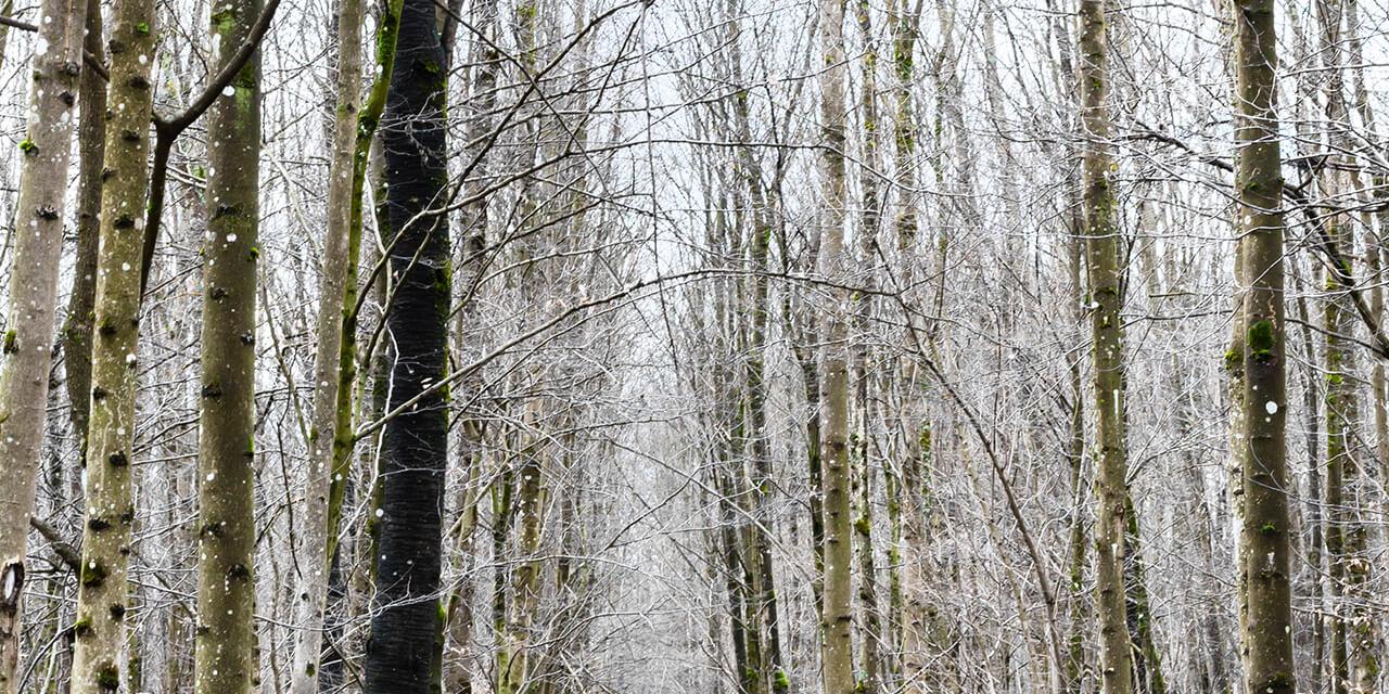 Roomers Baden-Baden Wintertime