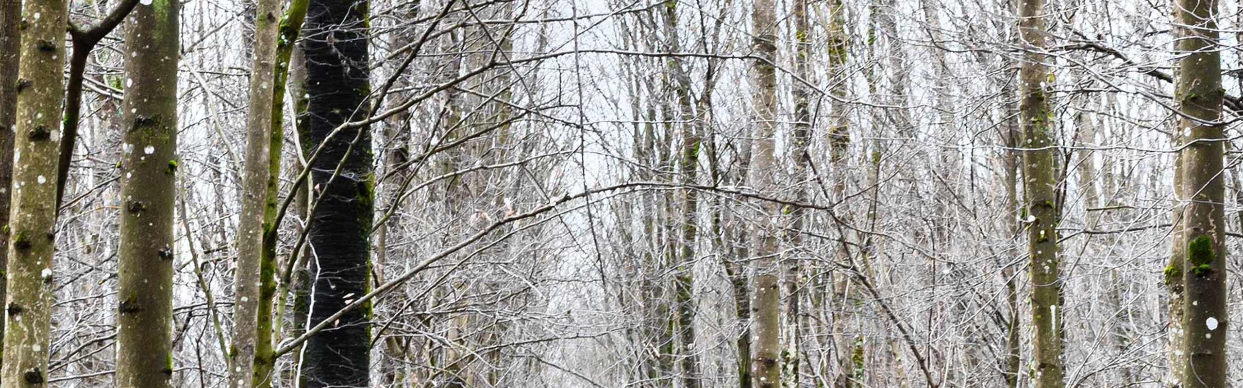 Roomers Baden-Baden Winter Time