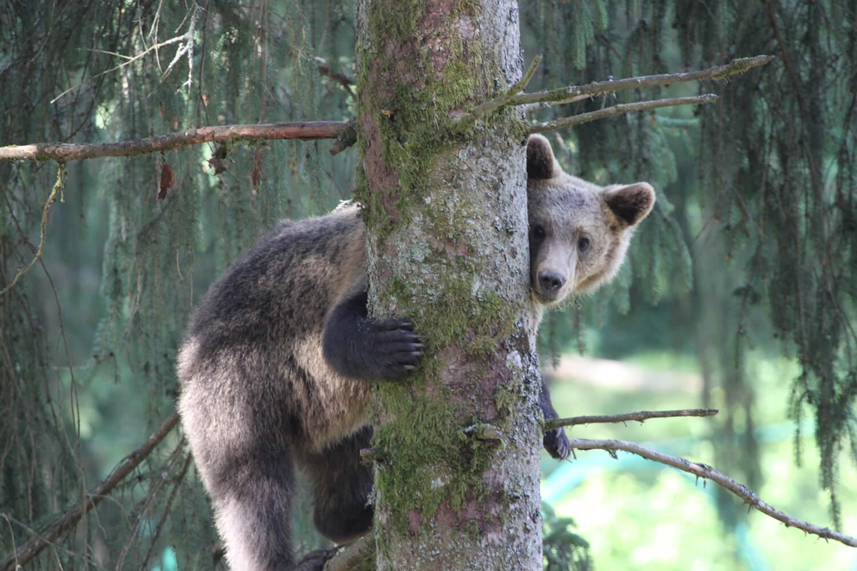 Roomers Baden-Baden Wolf und Bären Park Schwarzwald